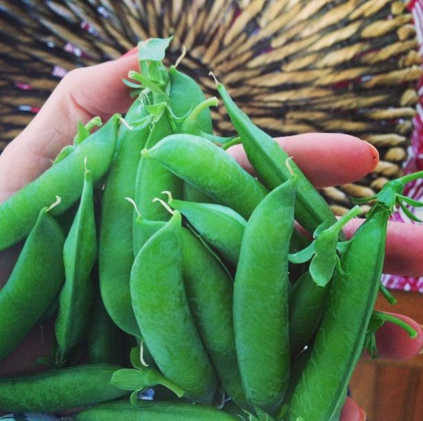 homegrown peas